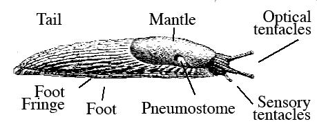 Parts of a slug