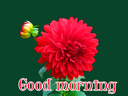 Flower Good morning  Images Wallpaper Pics Free