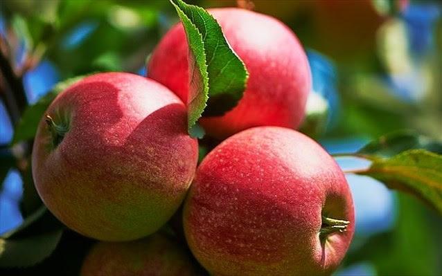 Perierga.gr - Δημιουργήθηκε μήλο «με ανθρακικό»