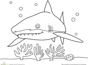Sneaky Shark | Worksheet | Education.com