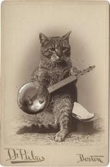 banjo-cat