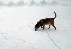 Sophie_SNOW_3212