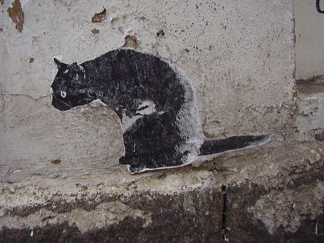 Котка зен графити