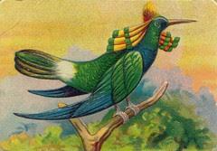 oiseauchromos 16