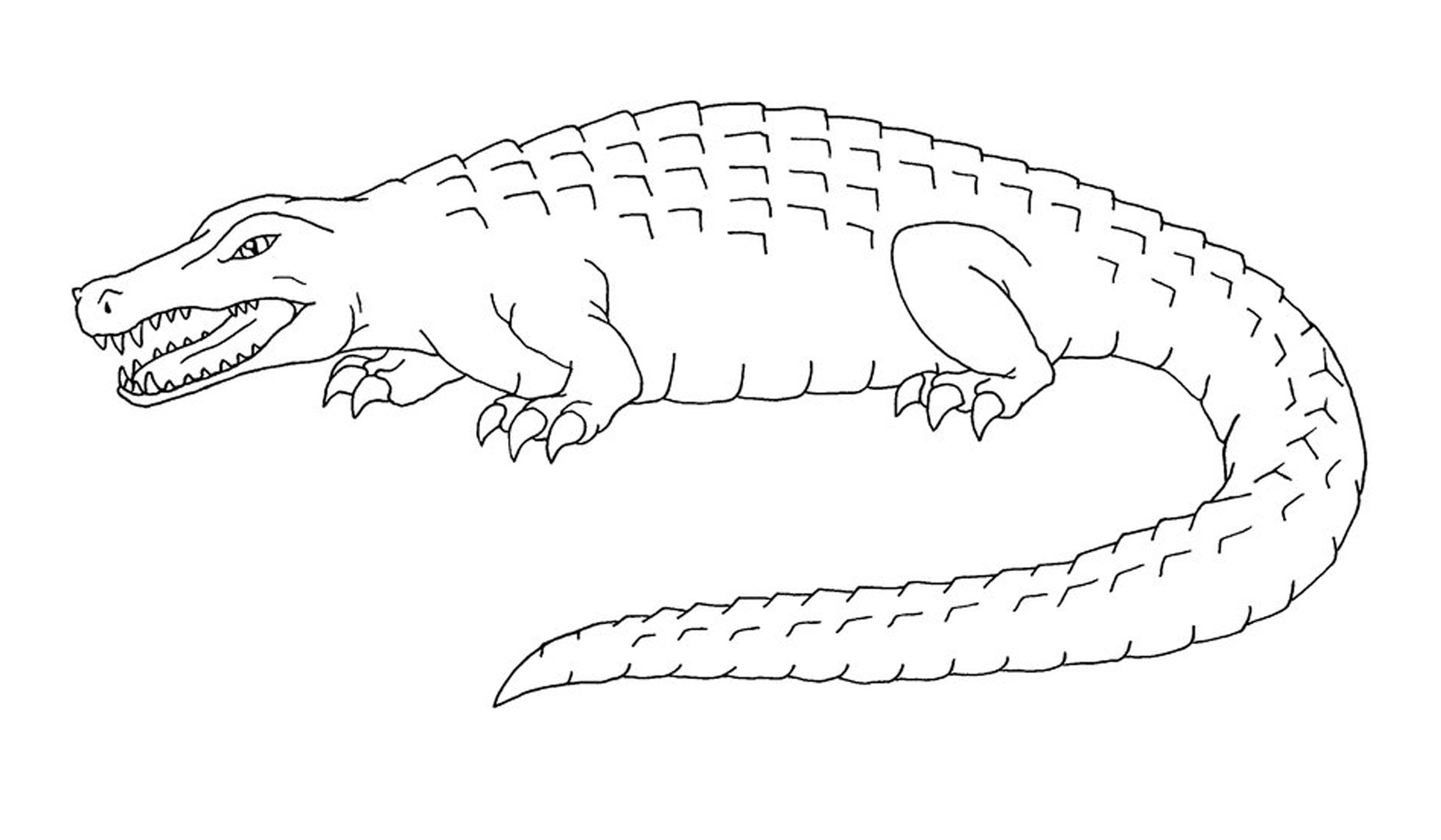 Top 10 Free Printable Crocodile Coloring Pages Online | 1925x3300