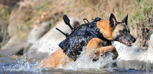 K9 Storm dog