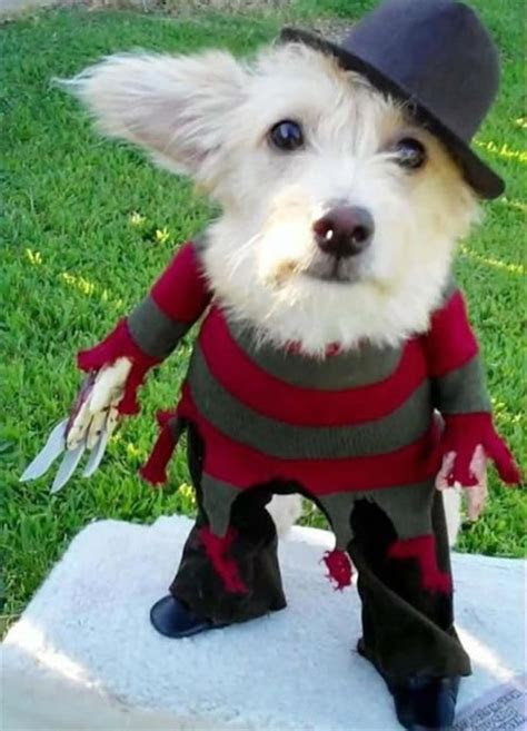 9 Dogs Dressed Like Freddy Krueger   Riot Daily