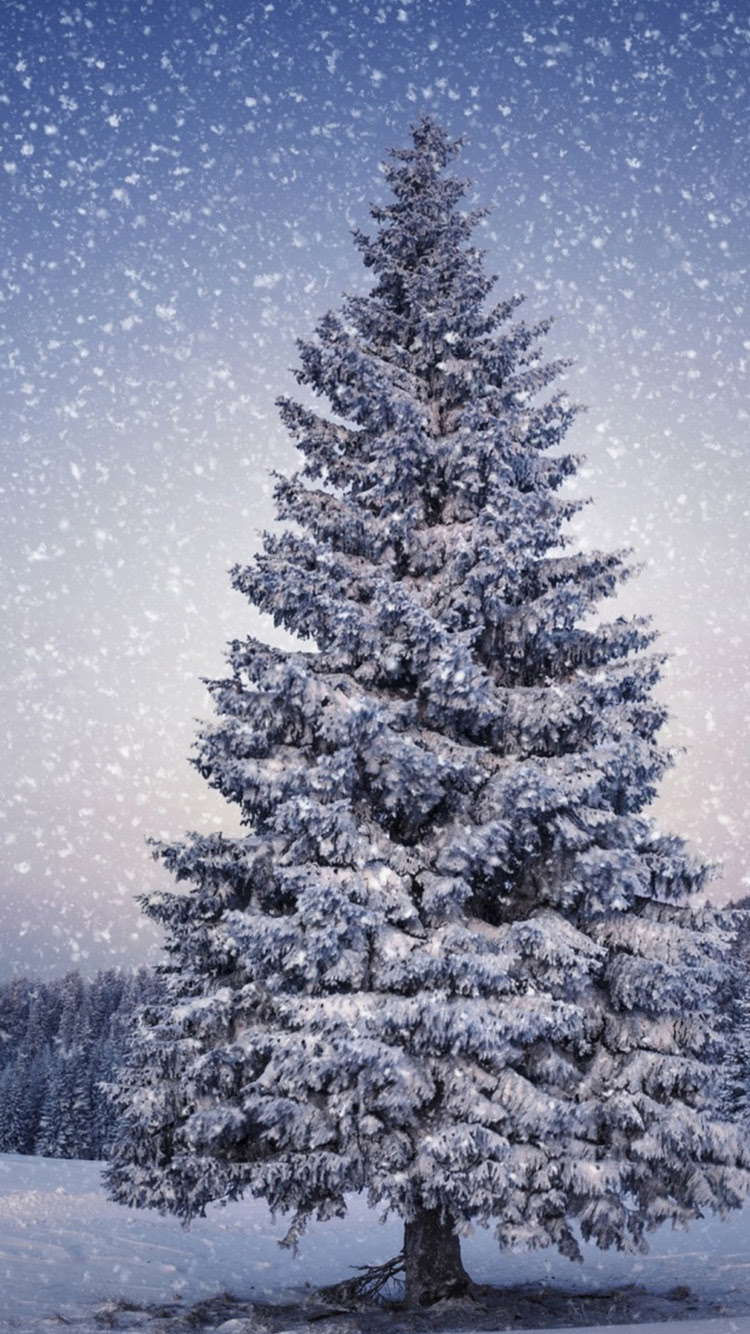 Christmas Tree In Snow Wallpapers Mobile Wallpaper Phone Background