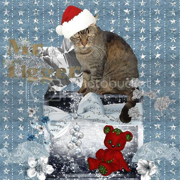 Tabby Cat,Domestic Cat,Snowcats Project,Holiday Glitter,Happy Holidays,Winter