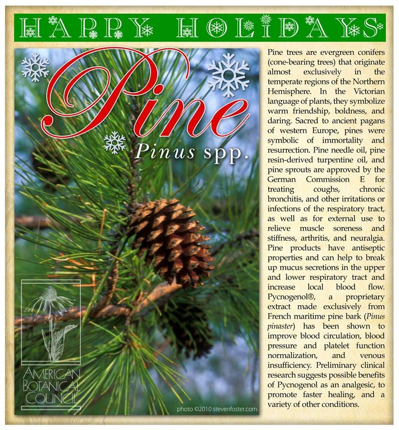 Pine Holidays