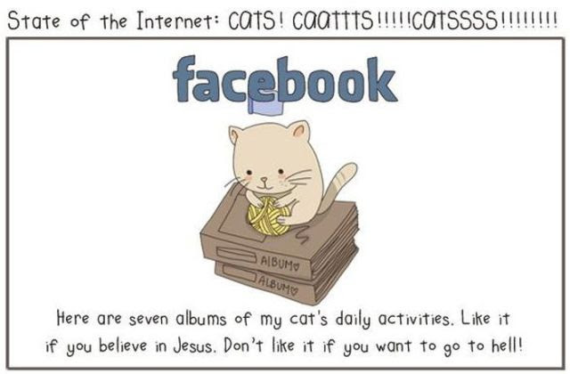 Cats Help Us to Understand the Internet