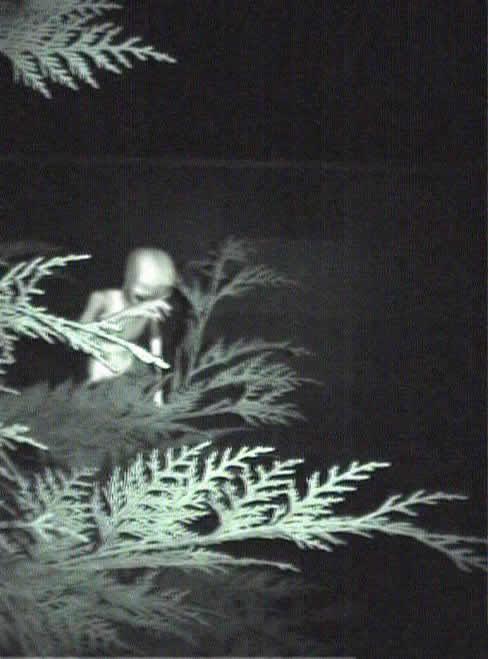 Real Alien Pictures |Alien-UFO-Research|