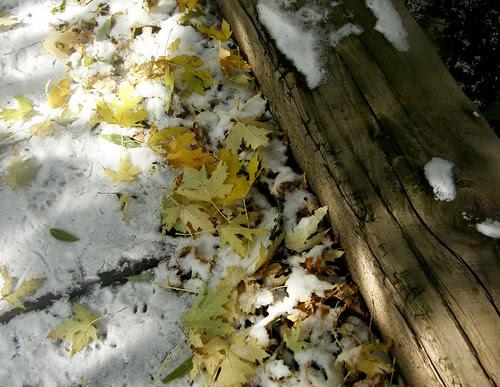 Fallen winter mix