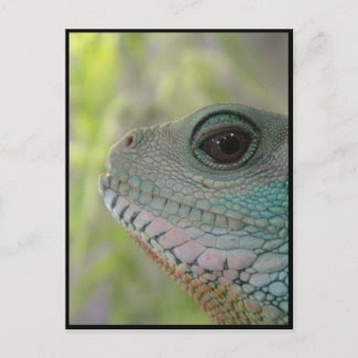 I'm watching you - Postcard postcard