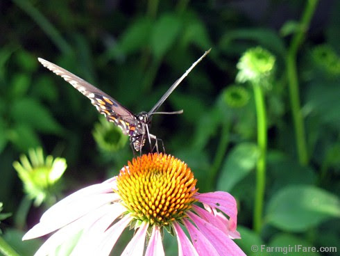Attracting Pollinators 2