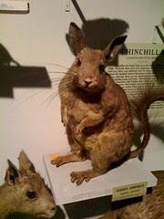 Harvard's Natural History Musem