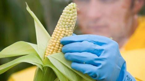 Peruano será miembro de importante organismo de FAO