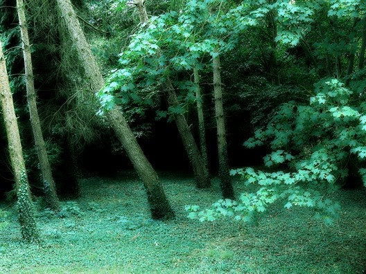 SPECIAL OFFER - 15X11 (inch) Print - 'Enchanted Forest'