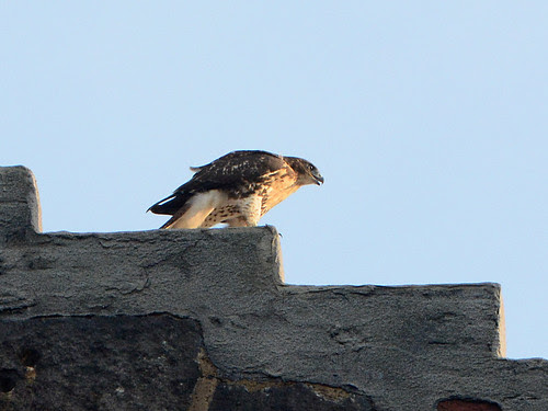 Fledgling on the Arch