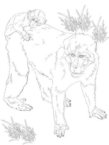 Disegno Di Il Macaco Giapponese E Cucciolo Da Colorare Disegni Da