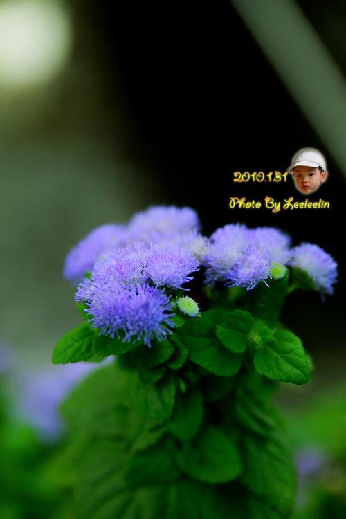 士林官邸|台北士林古蹟|士林景點