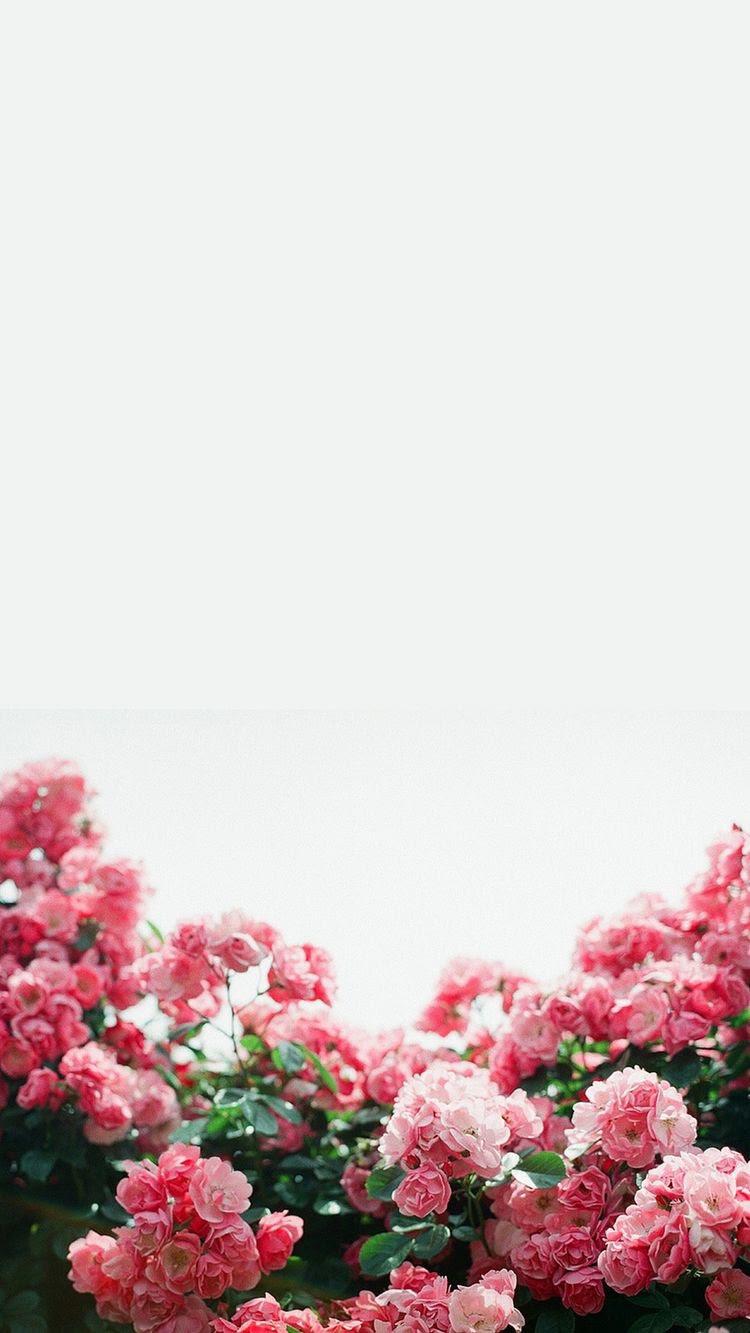ピンクのかわいい花 めちゃ人気 Iphone壁紙dj