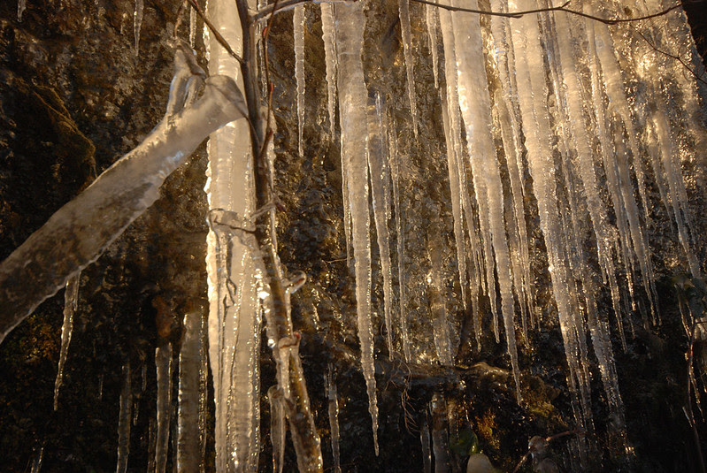 Stanley Park Icicles