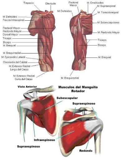 Masaje deportivo y Fisioterapia