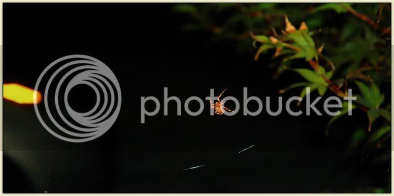 Borisovich the Spider