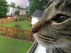 Maggie looking out back