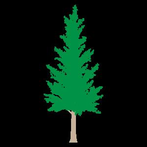 モミの木3 花植物イラスト Flode Illustration フロデイラスト