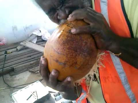 Guinness  man handle coconut by teeth
