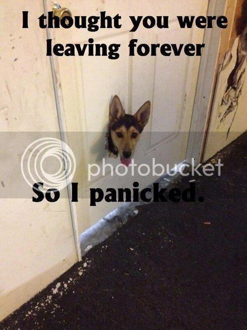 panicdog_zpsf46c5797.jpg
