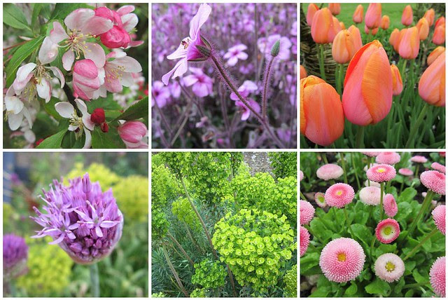 Lacock Abbey flowers