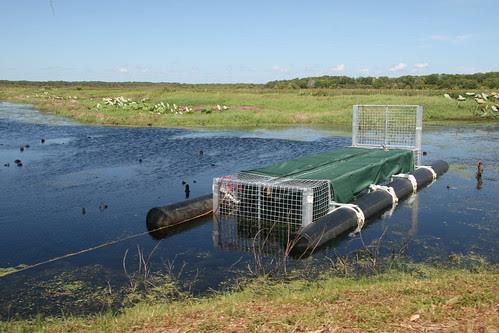 Crocodile Trap Fogg Dam_0176
