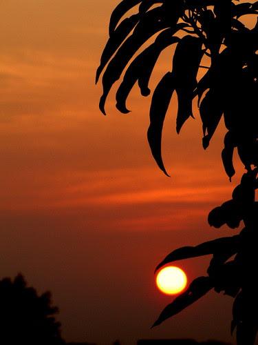 Sun between leaves