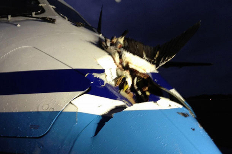 Pesawat Jepang Nabrak Burung !