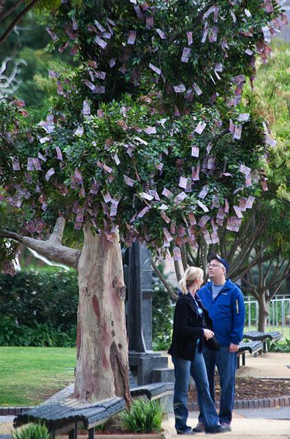 Money Grow on Trees in Australia - XciteFun.net