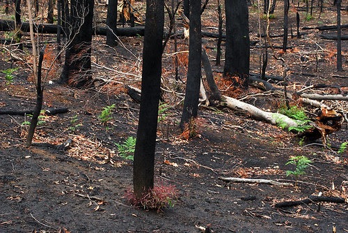 Beechworth bushfire, Victoria, Australia IMG_4901_Beechworth_Fire_2009