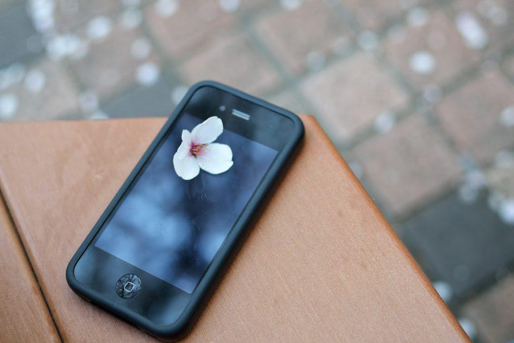 iPhone with sakura