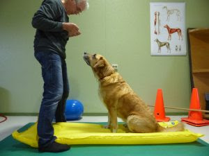 cães atletas exercícios