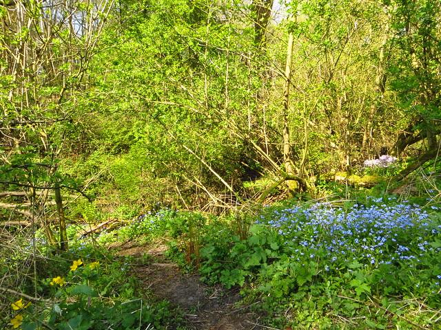At Hampstead Brook