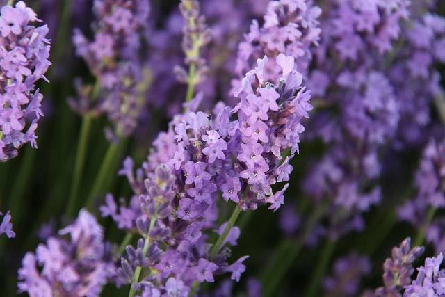 10 Flores Comestibles Pisos Al Dia Pisos Com