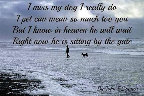 Missing You Quotes Pets