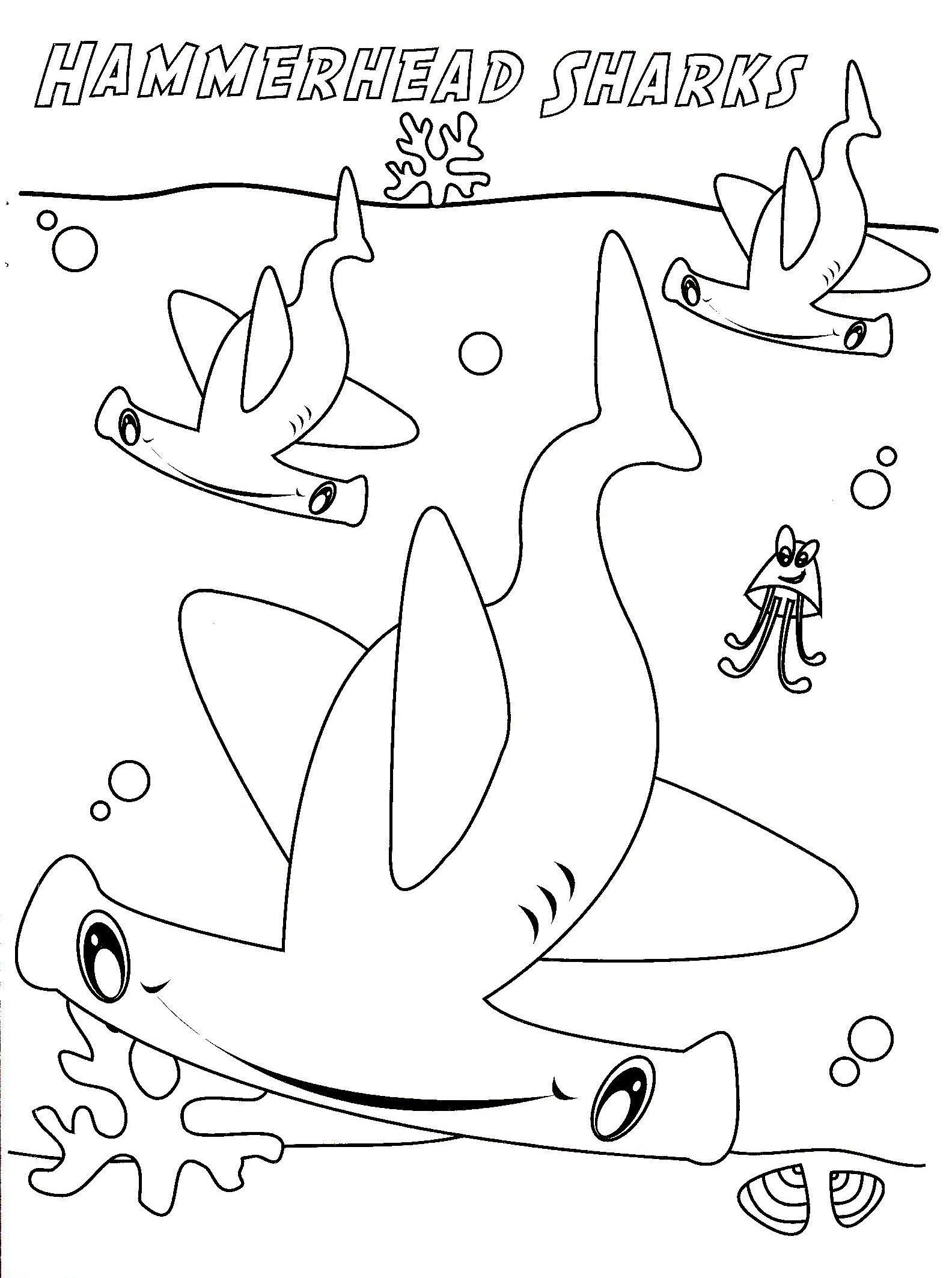 Hammerhead Shark Drawing at GetDrawings | Free download