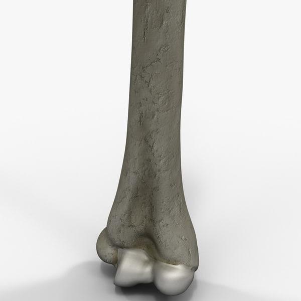 humerus bone 3d model