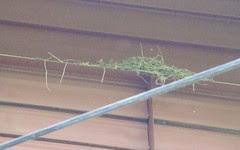 Messy nest Red Barn