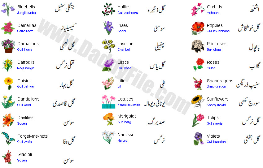 New List Of Flowers Name In English With Images Top Collection Of Different Types Of Flowers In The Images Hd