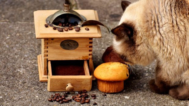 5 Foods to Avoid for Your Cat