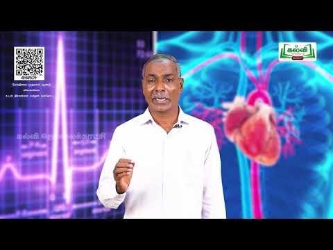 11th Zoology உடல் திரவங்களின் மற்றும் சுற்றோட்டம் அலகு 7 பகுதி 3 Kalvi TV